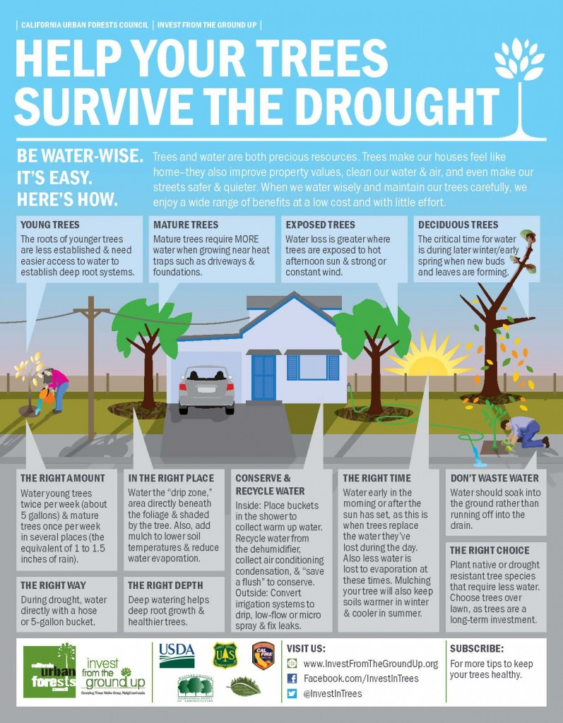 California Urban Forests Council helps us find ways to save our trees in the drought