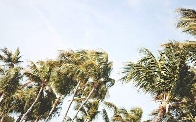 Windstorms: Is My Tree Prepared?